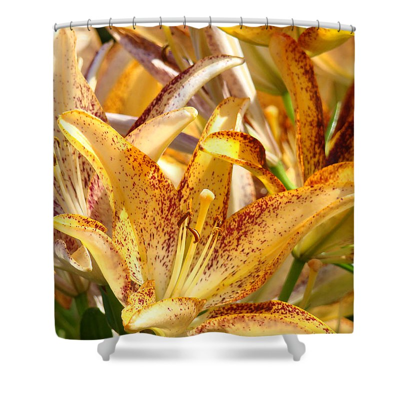 Lilies Shower Curtain featuring the photograph Lily Flower Garden Art Prints Canvas Floral Lilies Baslee Troutman by Baslee Troutman