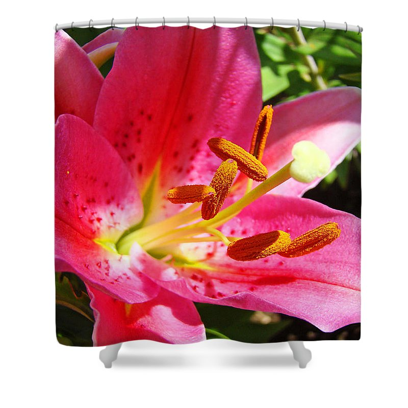 Lilies Shower Curtain featuring the photograph Lily Flower Pink Lilies Giclee Art Prints Baslee Troutman by Baslee Troutman