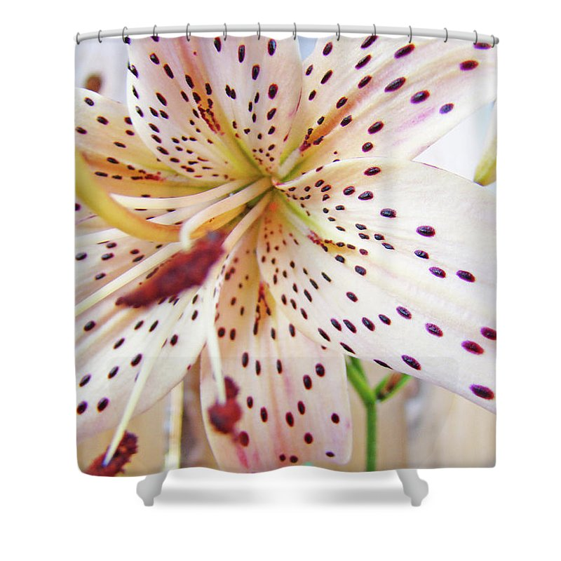 Lilies Shower Curtain featuring the photograph Lily Flower White Lilies Art Prints Baslee Troutman by Baslee Troutman