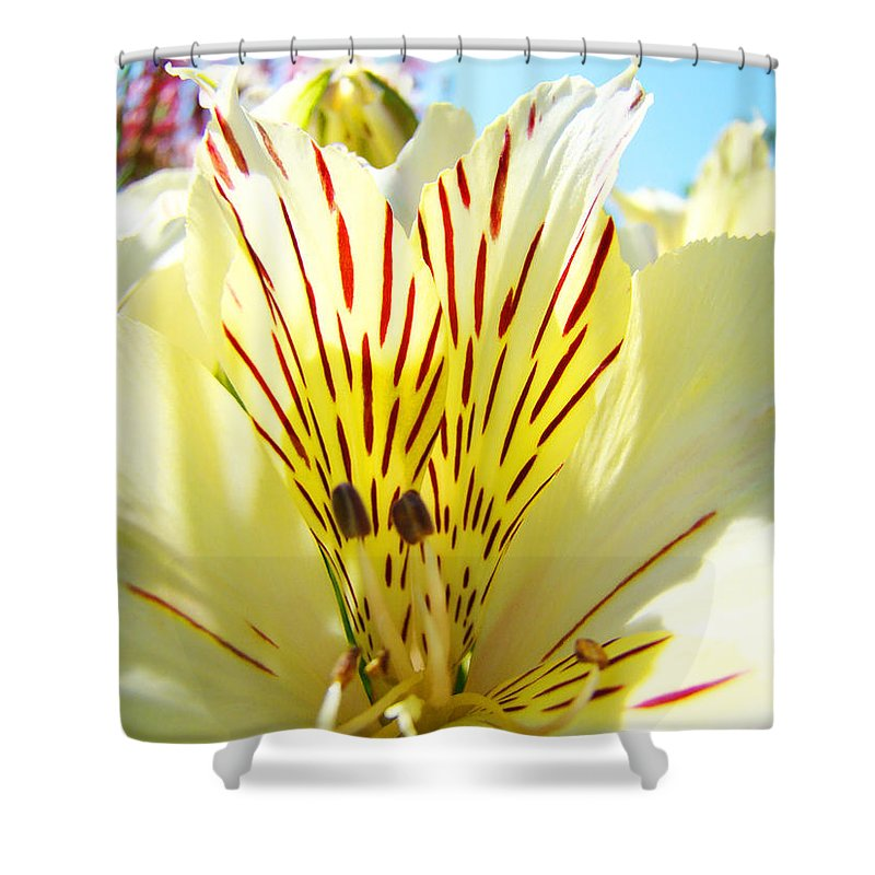 Lilies Shower Curtain featuring the photograph Lily Flowers Art Prints Yellow Lillies 2 Giclee Prints Baslee Troutman by Baslee Troutman