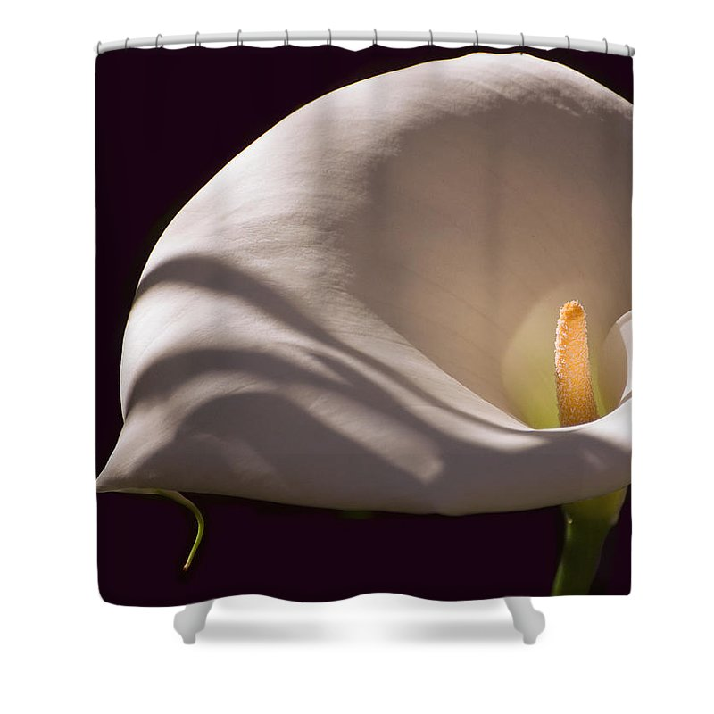 Calla Lily Shower Curtain featuring the photograph Lily In Shadows by Mick Burkey
