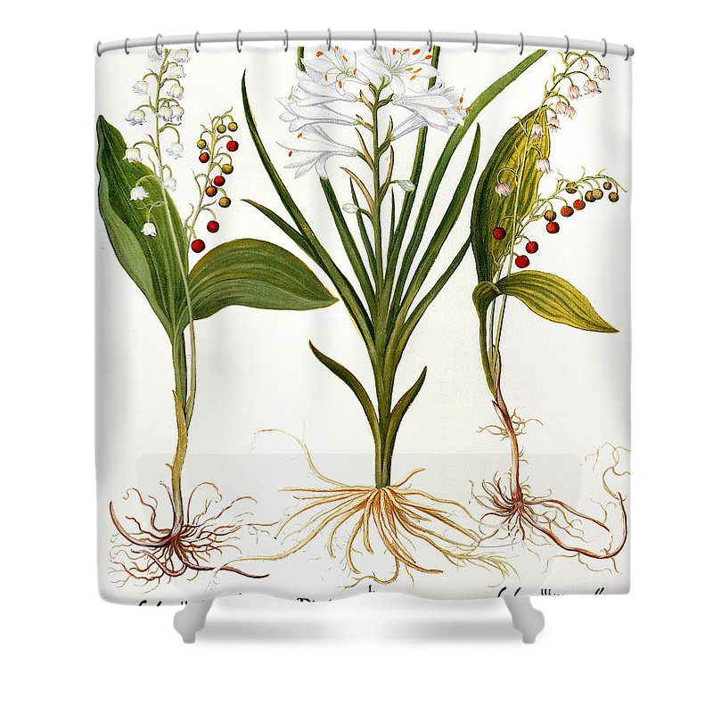 1613 Shower Curtain featuring the photograph Lily-of-the-valley by Granger
