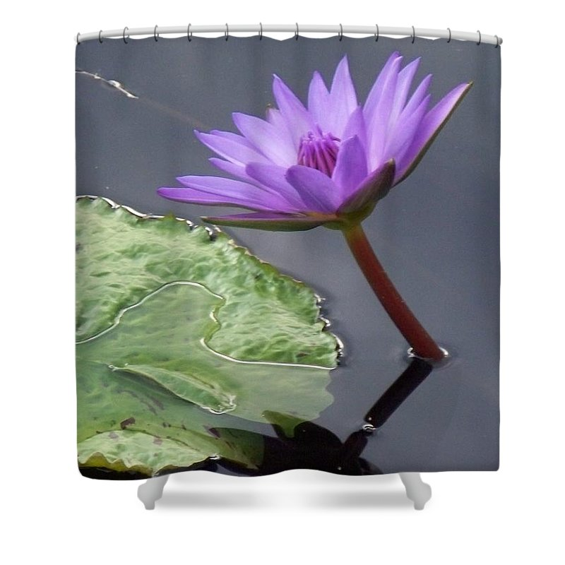 Photograph Shower Curtain featuring the photograph Lily Pond by Eric Schiabor