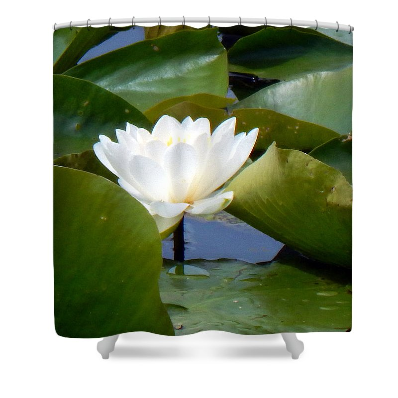 Spring Shower Curtain featuring the photograph Lily Tries To Be Seen by Wild Thing
