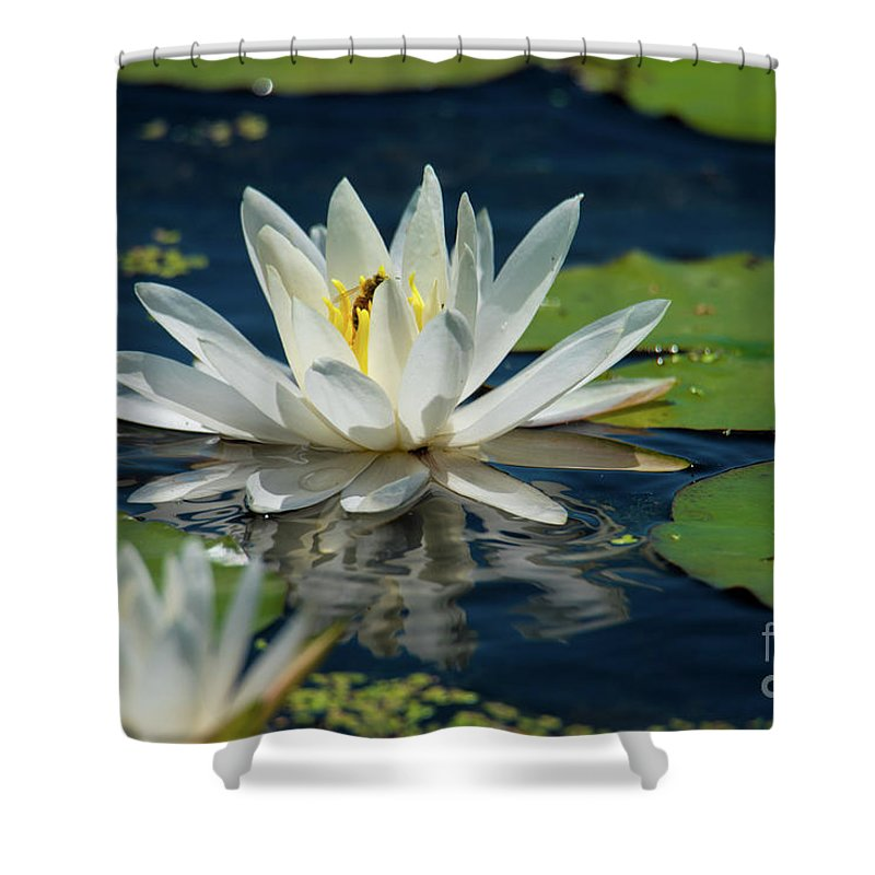 Lily Shower Curtain featuring the photograph Lily With Bee by Paul Mashburn