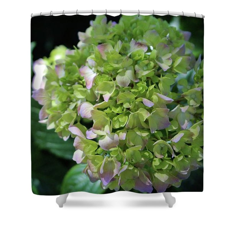 Hydrangea Shower Curtain featuring the photograph Lime-green Hydrangea by Cynthia Guinn