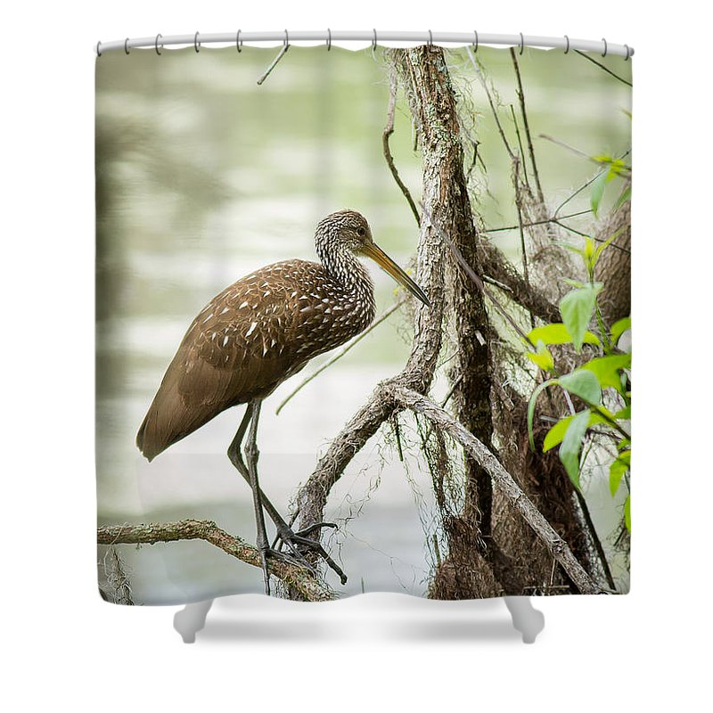 Limpkin Shower Curtain featuring the photograph Limpkin by Brad Marzolf Photography