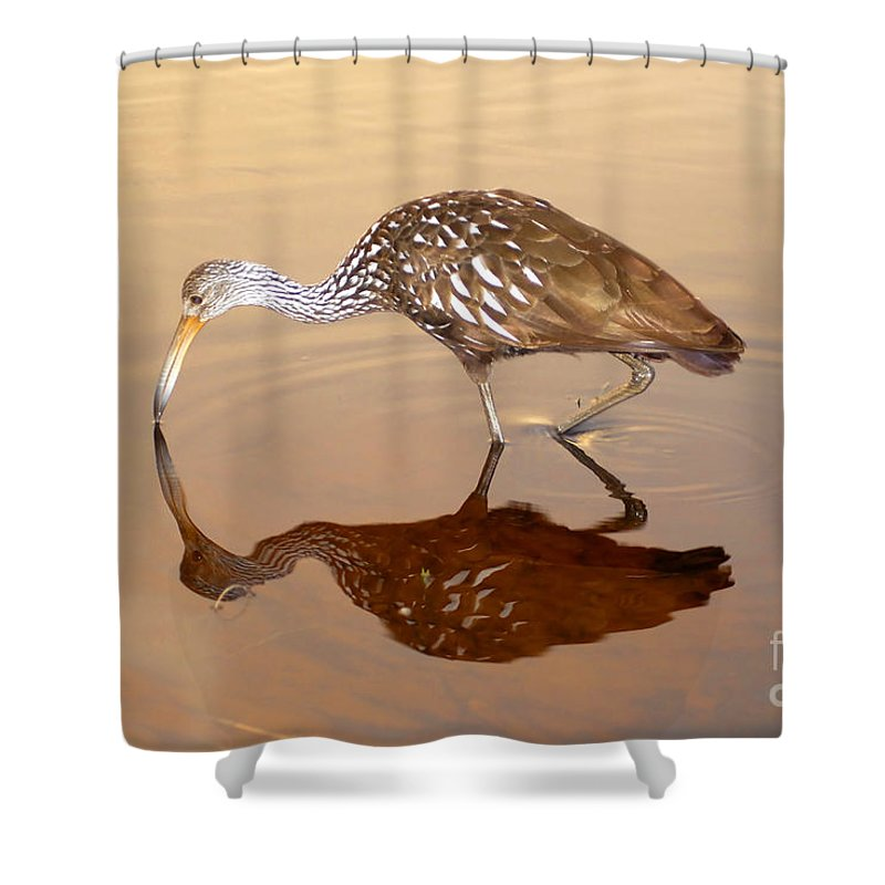 Limpkin Shower Curtain featuring the photograph Limpkin In The Mirror by David Lee Thompson