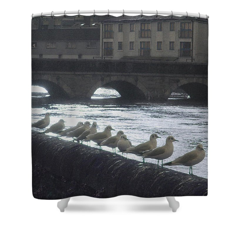 Birds Shower Curtain featuring the photograph Line Of Birds by Tim Nyberg