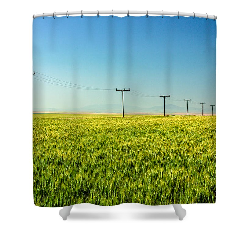 Green Shower Curtain featuring the photograph Lining A Sea Of Green by Todd Klassy