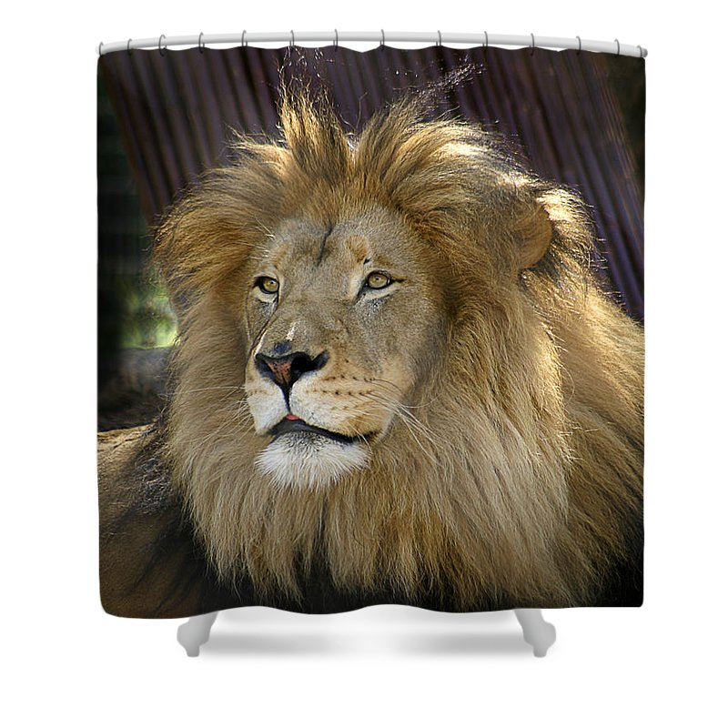 Zoo Shower Curtain featuring the photograph Lion by Anthony Jones