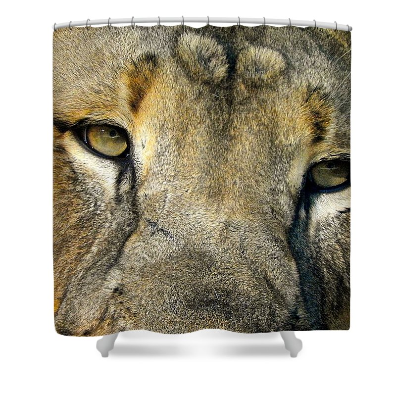 Lion Shower Curtain featuring the photograph Lion by Richard Martinez