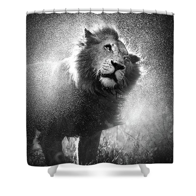 Shaken Shower Curtains