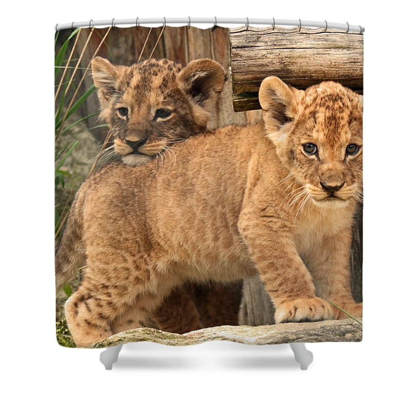 Lion Shower Curtain featuring the digital art Lion by Zia Low