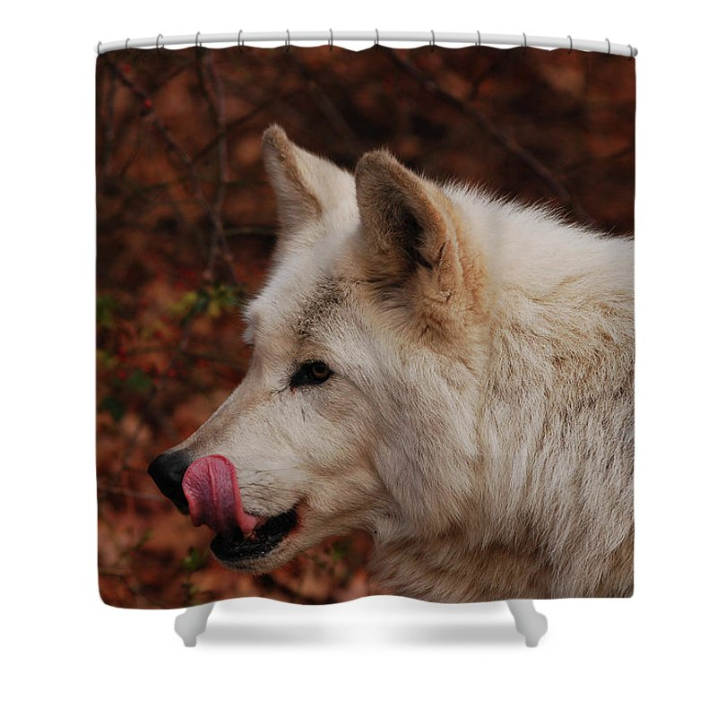 Wolf Shower Curtain featuring the photograph Lip Smacking Good by Lori Tambakis