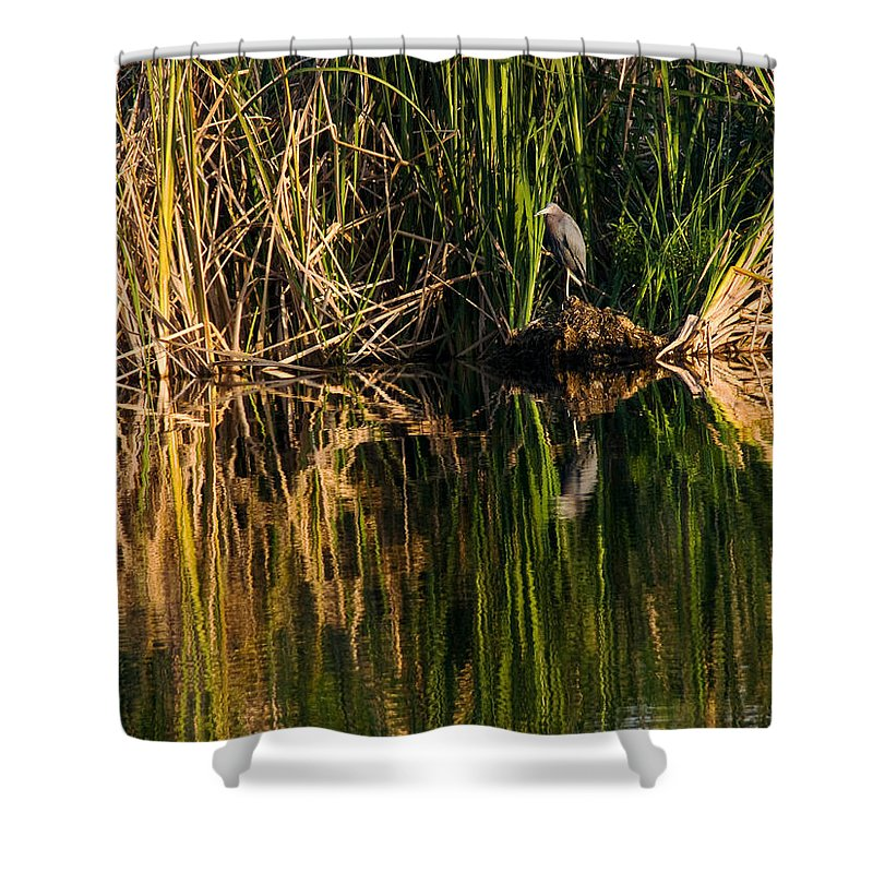 Heron Shower Curtain featuring the photograph Little Blue Heron by Steven Sparks