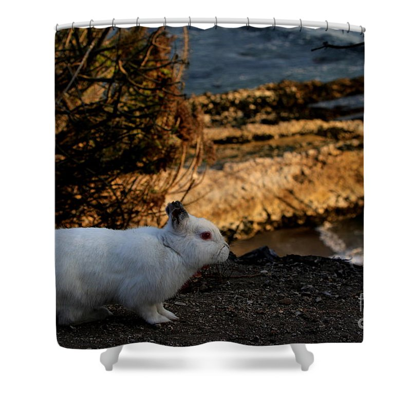 Bunny Shower Curtain featuring the photograph Little Bunny Foo Foo Goes To The Ocean by Craig Corwin