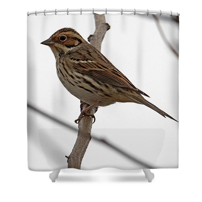 Buntings Shower Curtain featuring the photograph Little Bunting by Eric Nelson