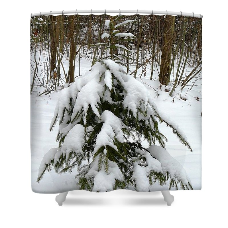 Christmas Shower Curtain featuring the photograph Little Christmas Tree by Valerie Ornstein