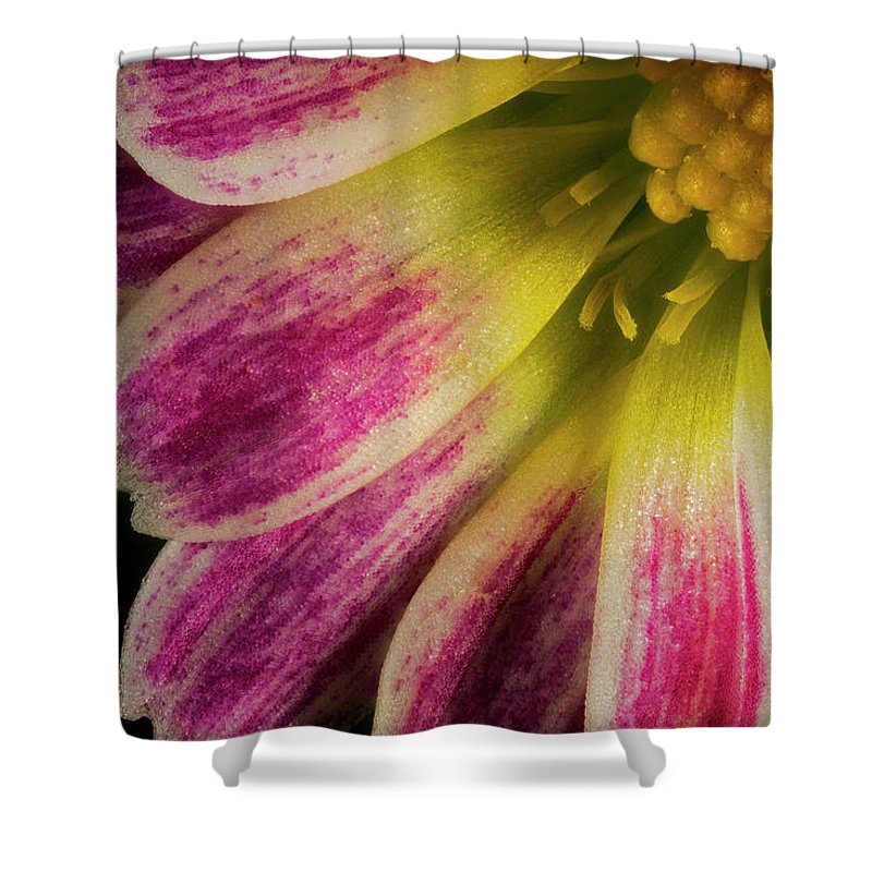Macro Shower Curtain featuring the photograph Little Flower Quadrant by Robert Storost