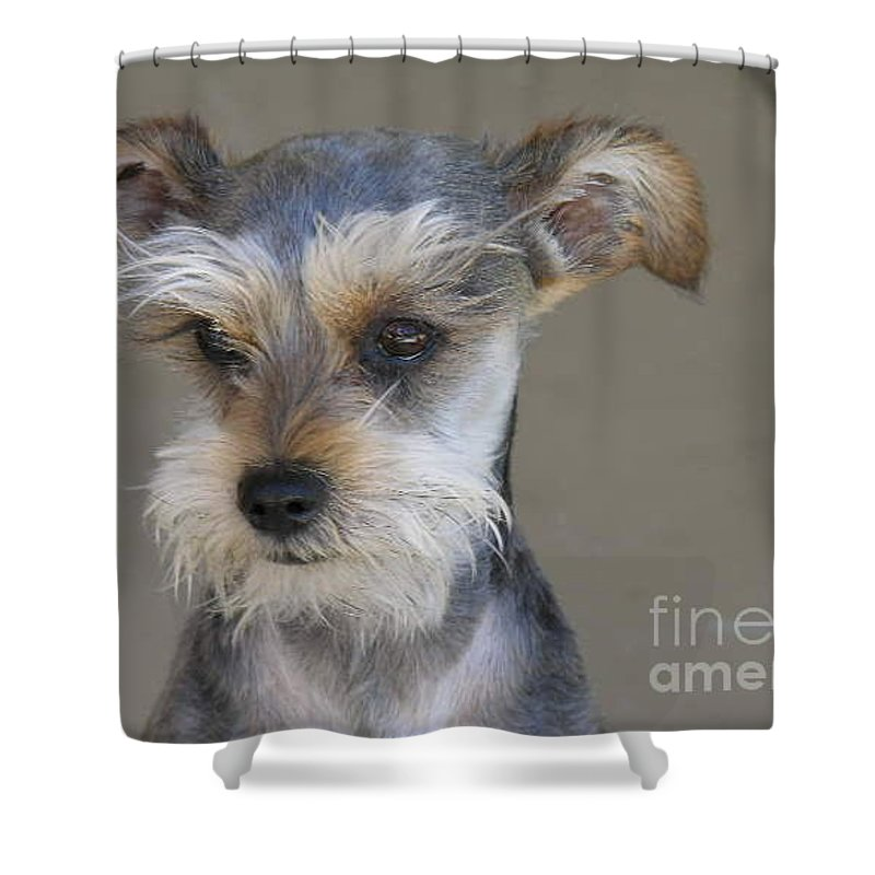 Schnausher Shower Curtain featuring the photograph Little Guy by Diane Greco-Lesser