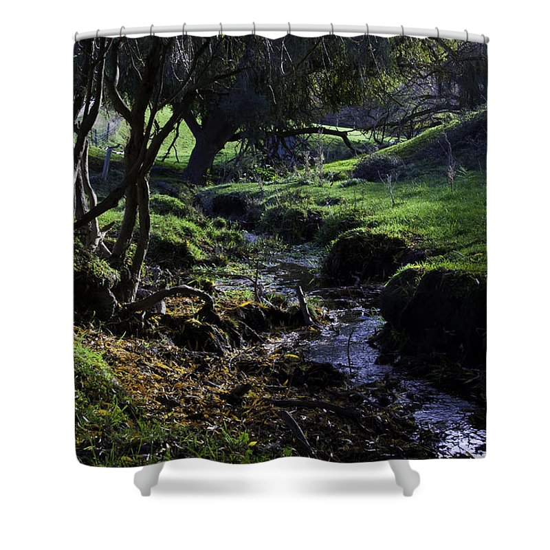 Stream Shower Curtain featuring the photograph Little Stream by Kelly Jade King