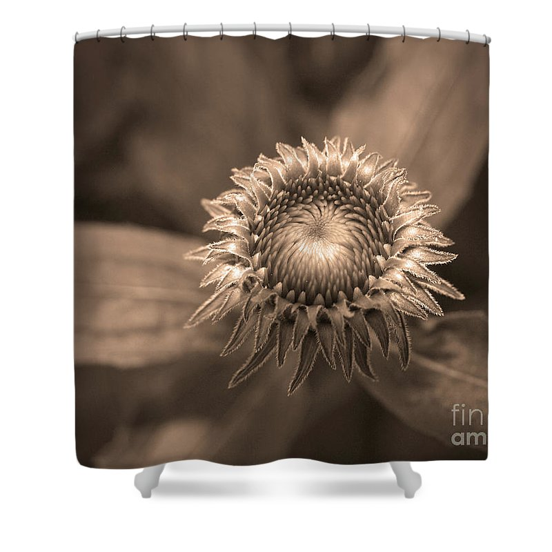 Bud Shower Curtain featuring the photograph Little Things by Tara Turner