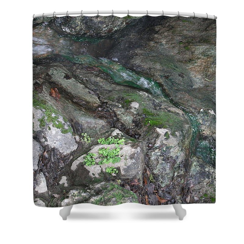 Mossy Shower Curtain featuring the photograph Little Trickle by Lynn Michelle