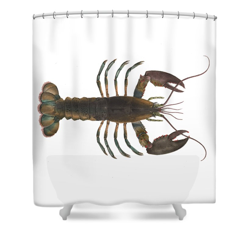 Lobster Shower Curtain featuring the digital art Lobster by Sarah Pierson