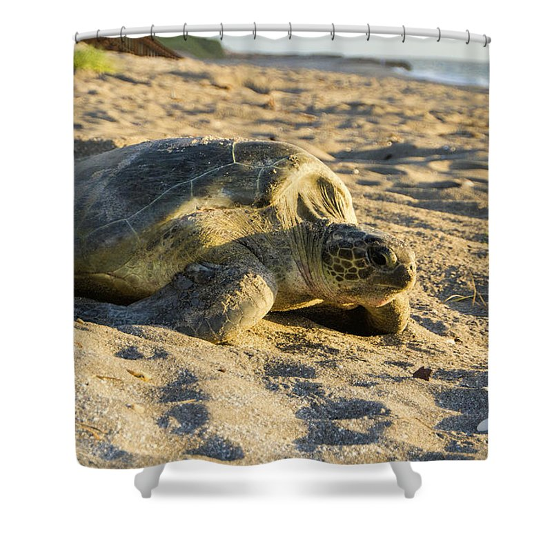 Loggerhead Sea Turtle Shower Curtain featuring the photograph Loggerhead Sea Turtle Returning To The Ocean by Adam Byerly