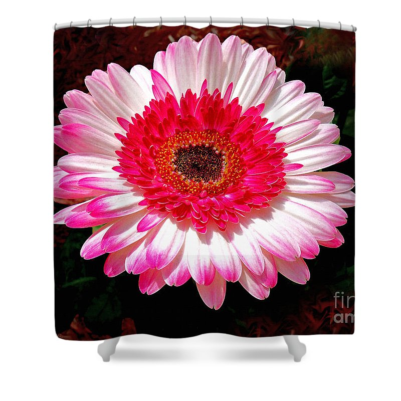 Lollipop Gerber Daisy Shower Curtain For Sale By Patricia L Davidson