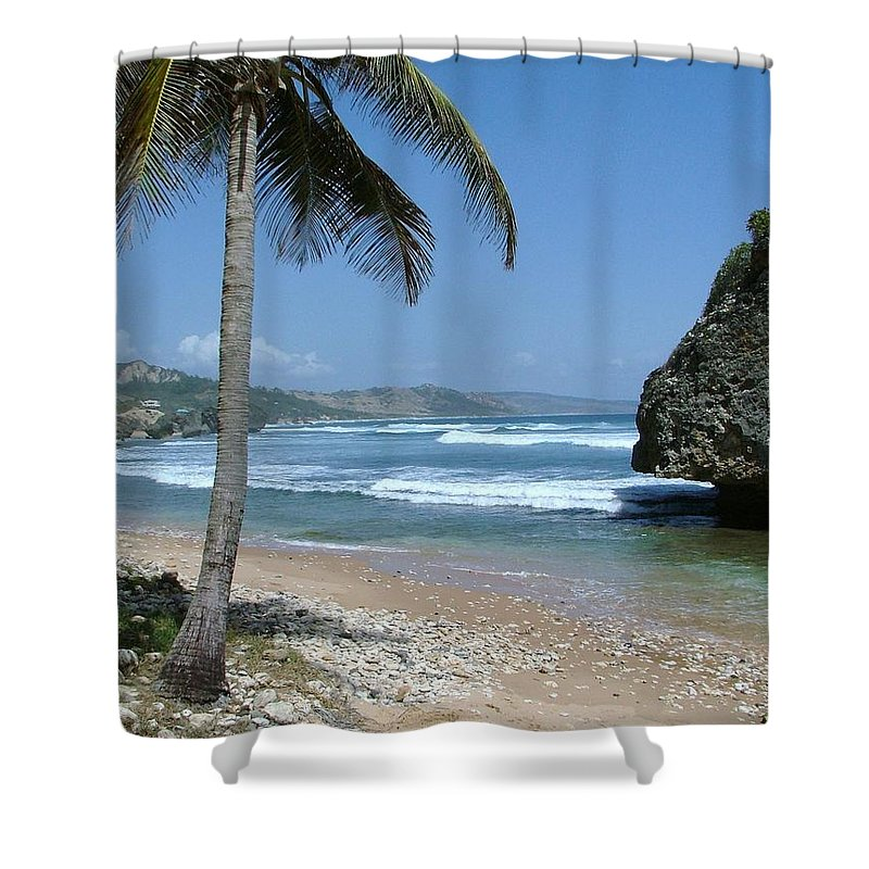 Carribean Shower Curtain featuring the photograph Lone Palm On Barbados Coast by Neil Zimmerman