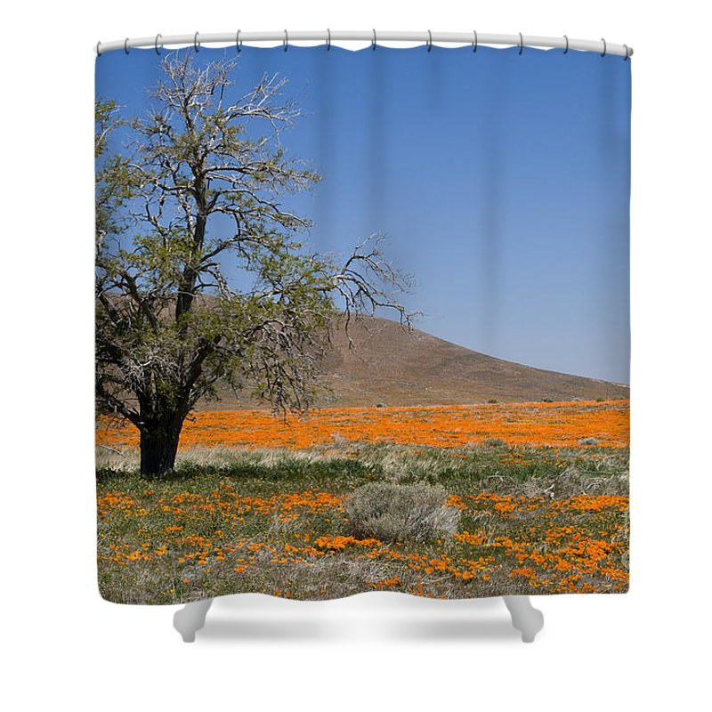 Poppies Shower Curtain featuring the photograph Lone Tree In The Poppies by Sandra Bronstein