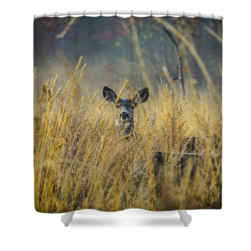 Abandoned Shower Curtain featuring the photograph Lonely Deer In The Field by Daniel Brunner