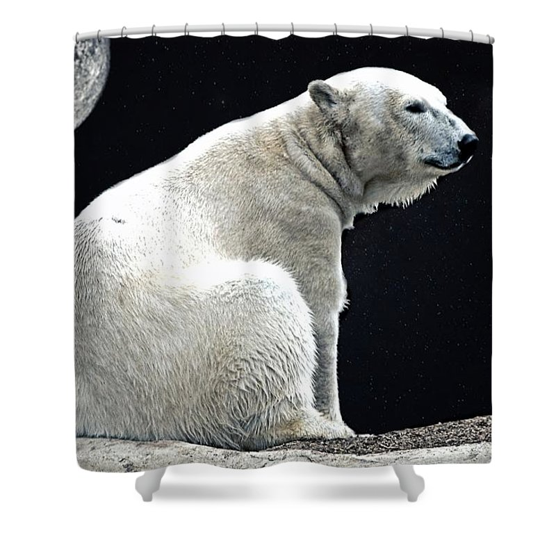 Polar Bear Shower Curtain featuring the photograph Lonely by DJ Florek