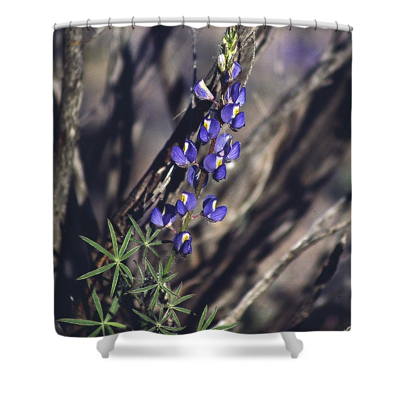 Flower Shower Curtain featuring the photograph Lonely Lupine by Randy Oberg
