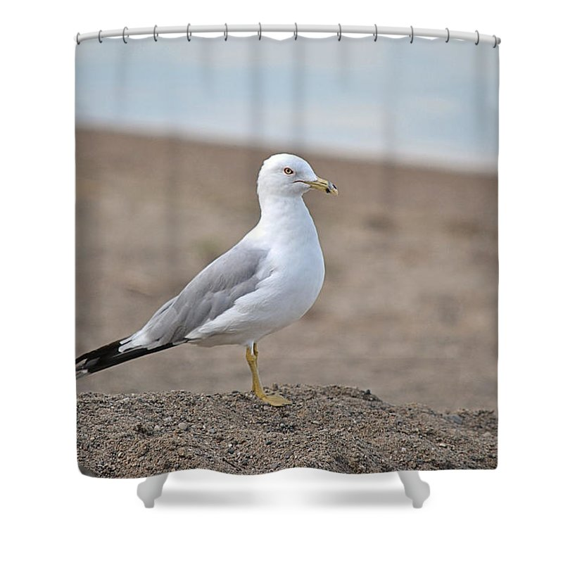 Seagull Shower Curtain featuring the photograph Lonely Seagull by Nicole Frederick