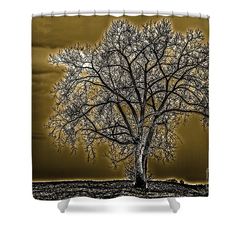 Tree Shower Curtain featuring the photograph Lonesome Tree by William Norton