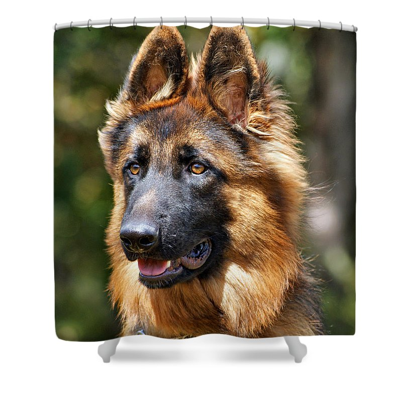 German Shepherd Shower Curtain featuring the photograph Long Coated German Shepherd Dog by Sandy Keeton