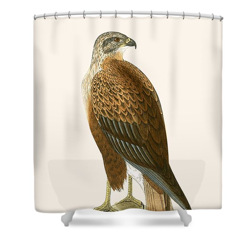 Buzzard Shower Curtains