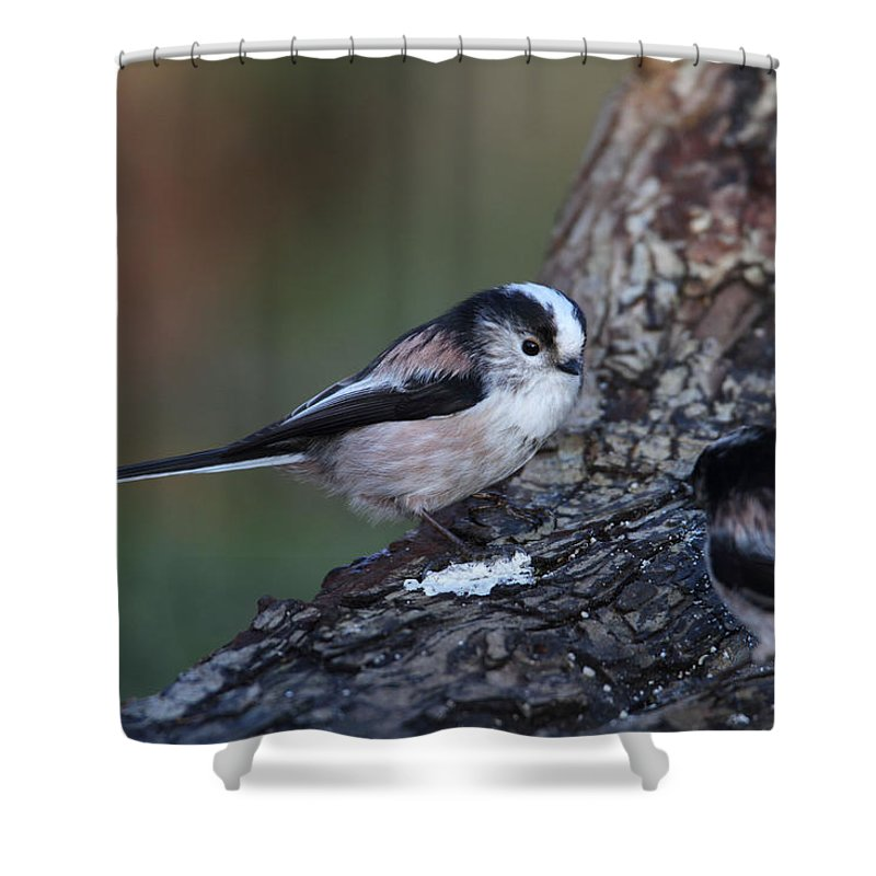 Long Tailed Tit Shower Curtain featuring the photograph Long-tailed Tit by Bob Kemp