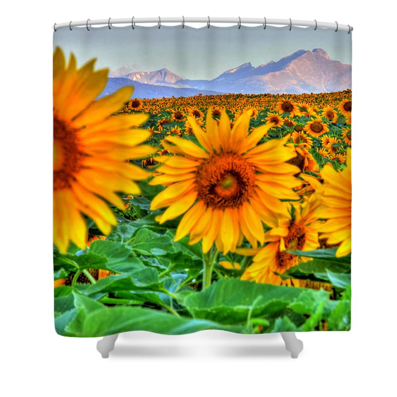 Mountains Shower Curtain featuring the photograph Longs Sunflowers by Scott Mahon