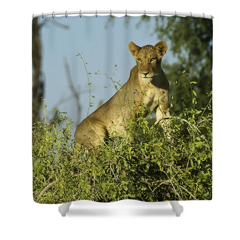 Africa Shower Curtain featuring the photograph Look How High I Can Climb by Michele Burgess