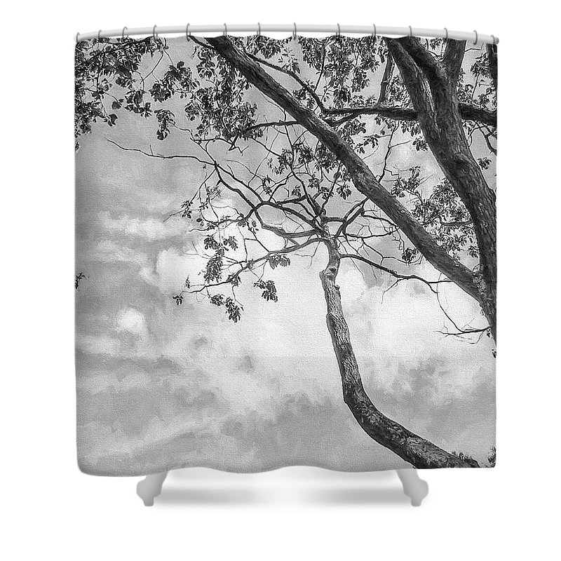 Tree Shower Curtain featuring the photograph Look Up Into The Sky by John Rivera