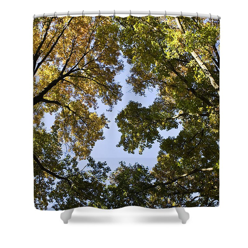 Fall Shower Curtain featuring the photograph Look Up by Teresa Mucha