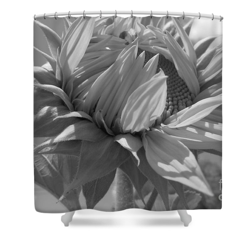 Sunflower Shower Curtain featuring the photograph Lookin Up by ChaNooga Annie