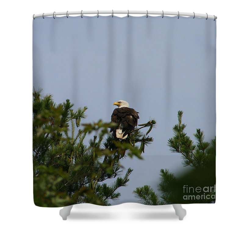 Bald Eagle Shower Curtain featuring the photograph Looking Ahead by Neal Eslinger