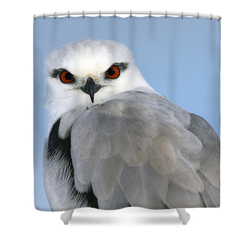 Shower Curtain featuring the photograph Looking At Me by David Trent