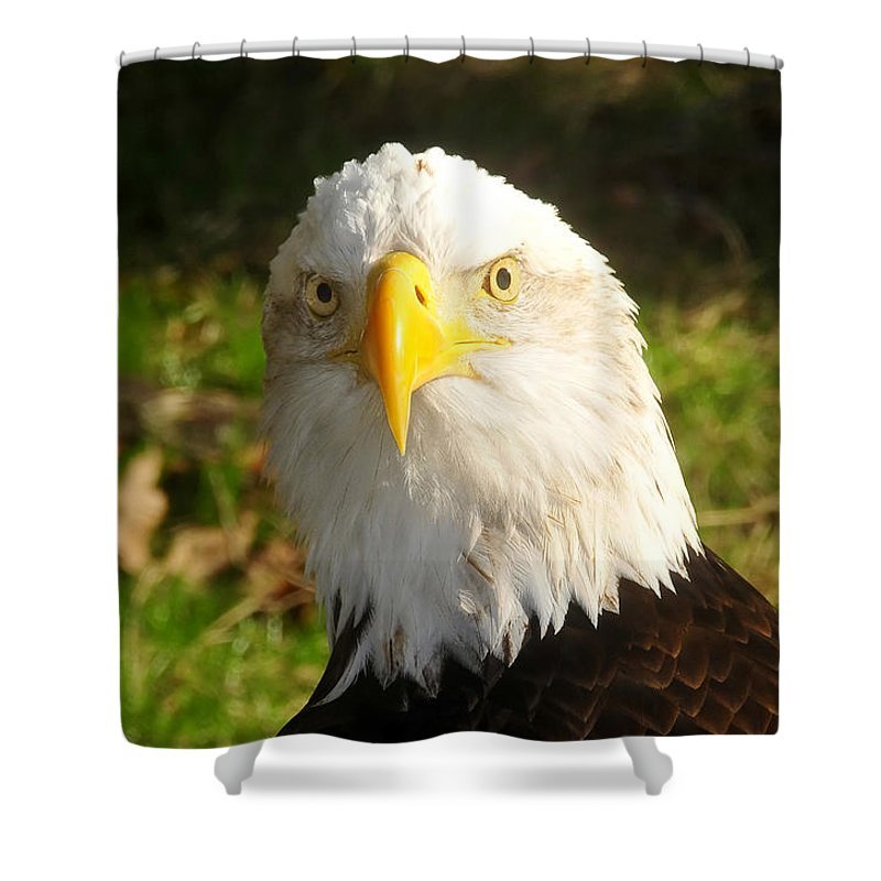 American Bald Eagle Shower Curtain featuring the photograph Looking Eagle by David Lee Thompson