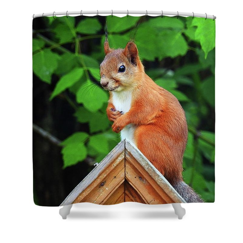 Nature Shower Curtain featuring the photograph Looking Fo A Friend by Katya Milano